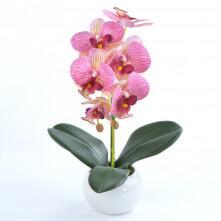 Arranjo de Orquídea Rosa Estriada em Vaso Branco Clara