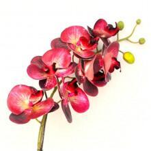 Arranjo de Orquídea Toque Real em Aquário Prateado