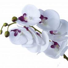 Haste de Orquídea Branca e Rosa com Folha e Raiz