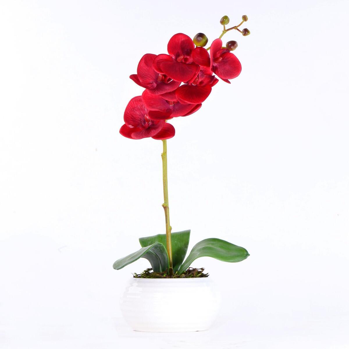 Arranjo de Orquídea Vermelha L'amour