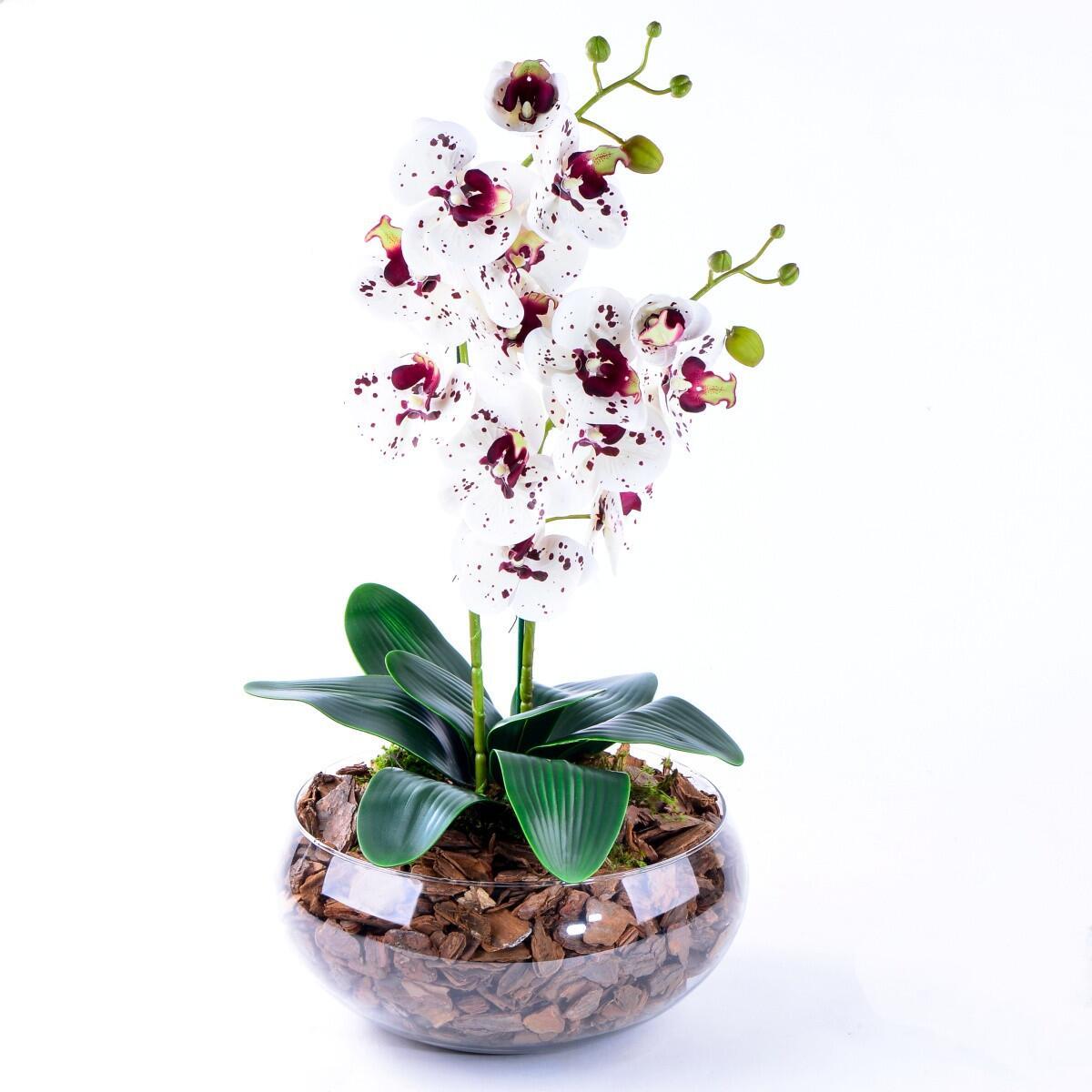 Arranjo de Orquídea Toque Real Deluxe