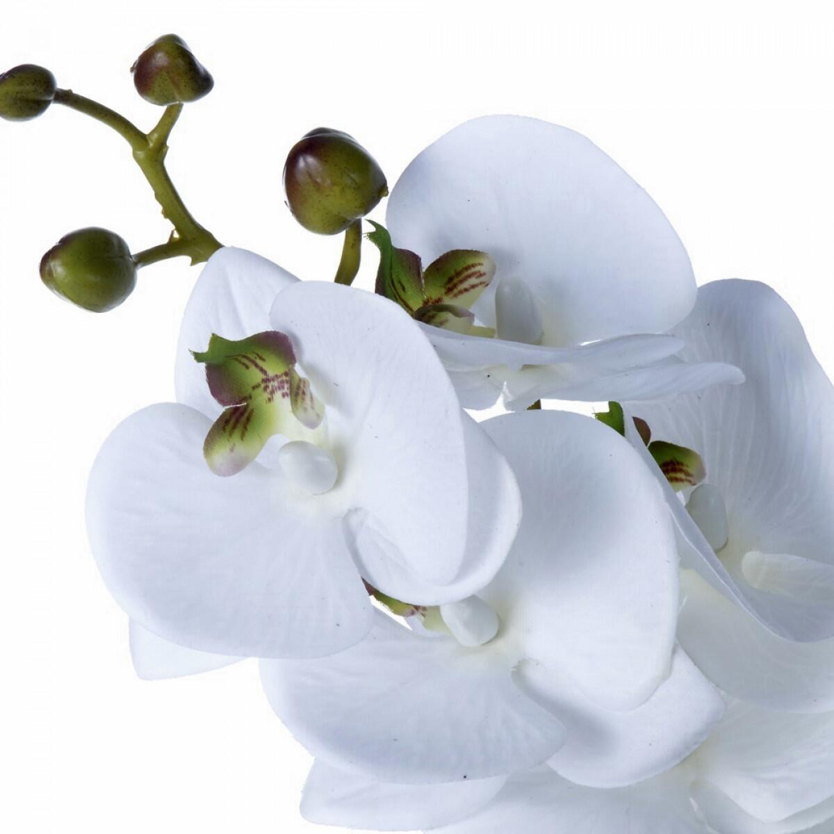 Haste de Orquídea Branca e Verde com Folha e Raiz