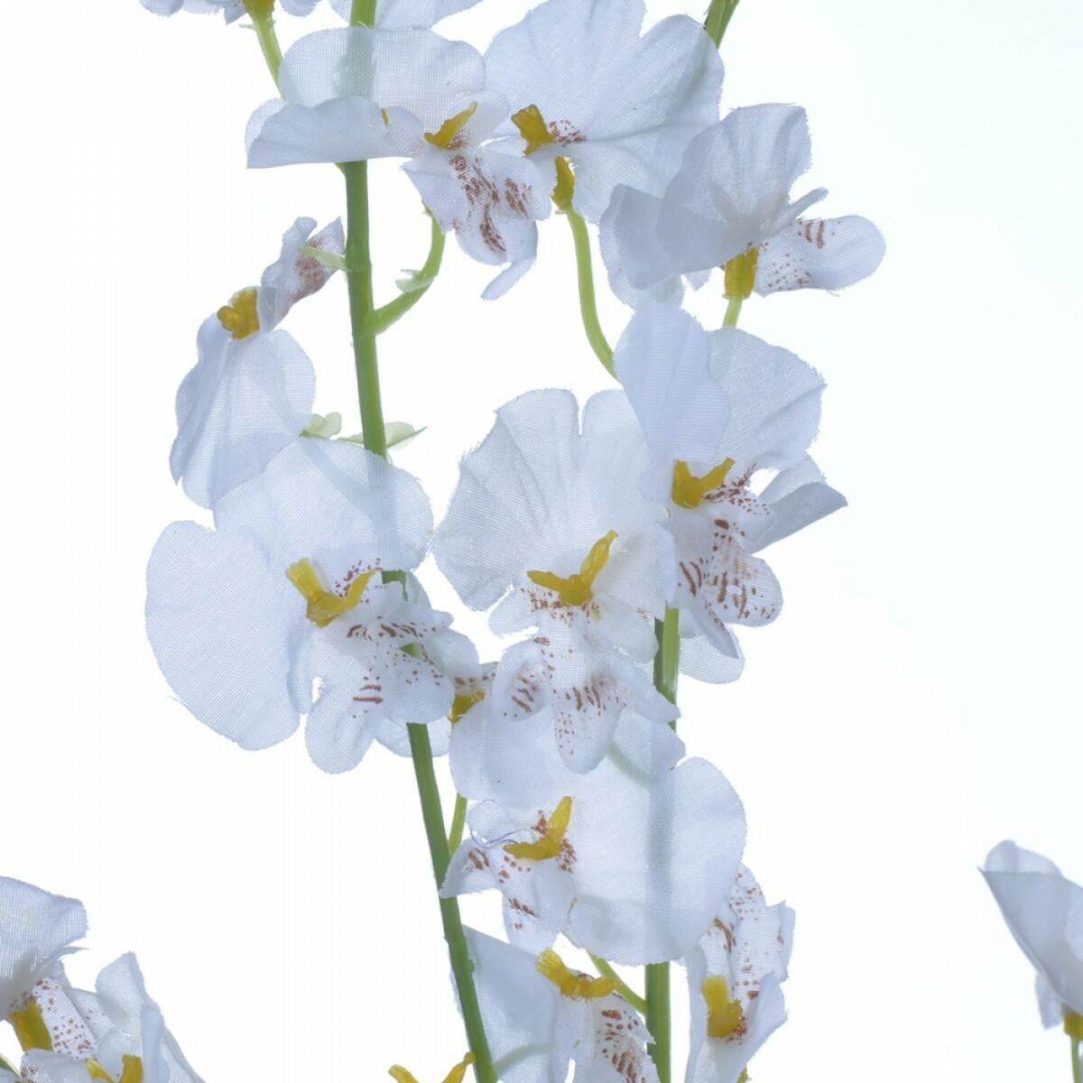 haste-de-orquidea-chuva-de-prata-branca