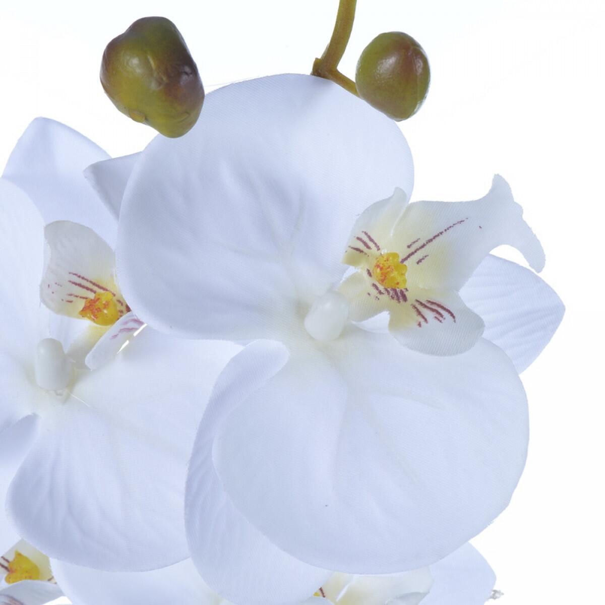 Haste de Orquídea Phalaenopsis Branca