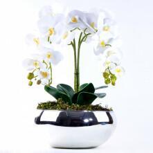 Arranjo com 4 Orquídeas Brancas Toque Real Vibrante